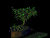 bonsai_big.png